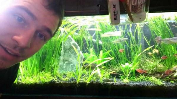 Le top 5 aquarium terrarium